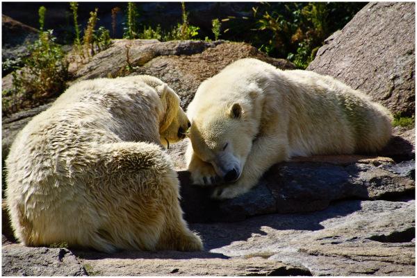 Berliner Zoo 4