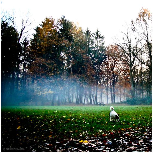a foggy day 5