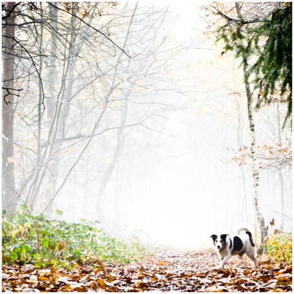 a foggy day 9