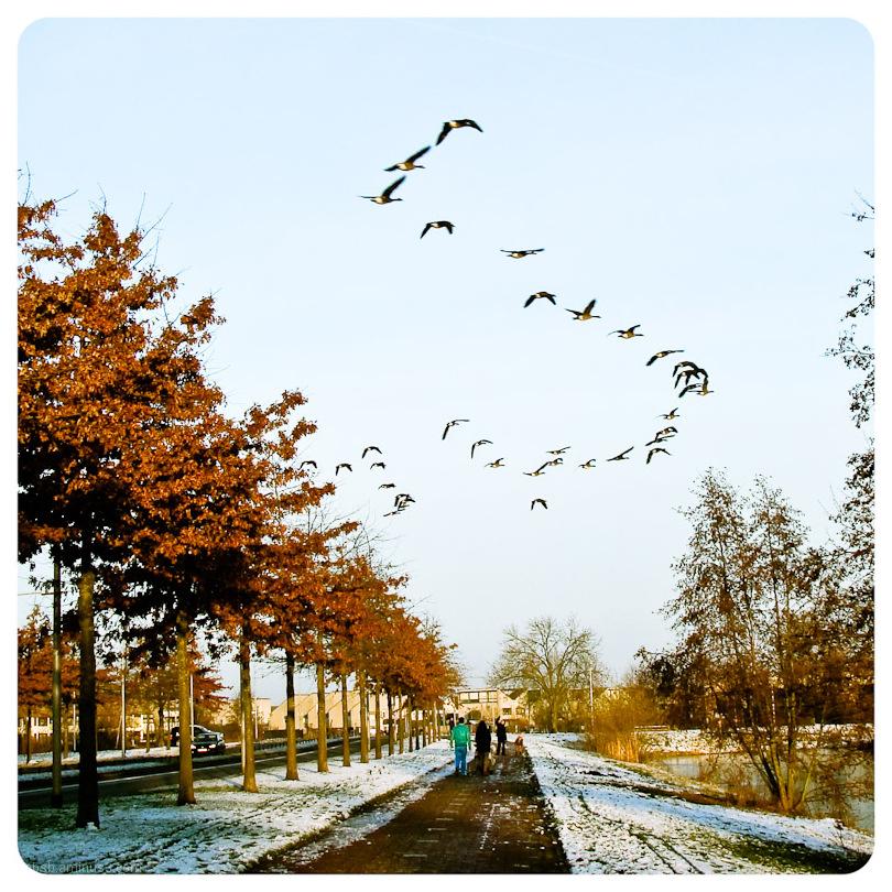 birds travelling