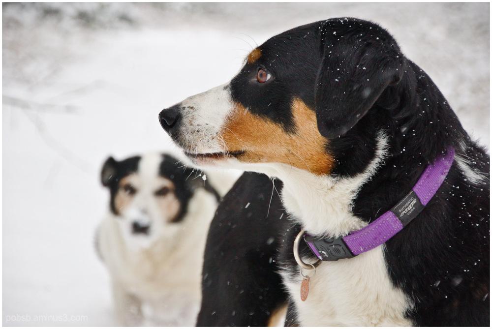 dog and snow 1