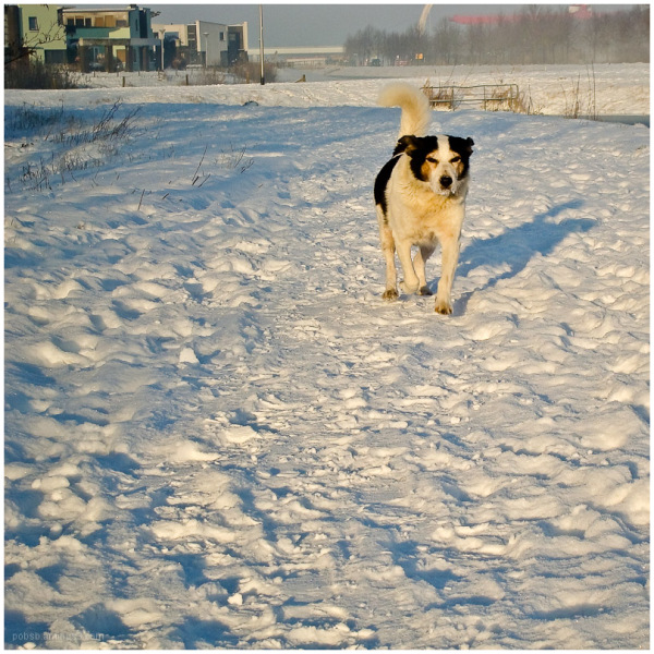 dog and snow 4