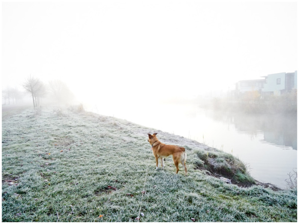 mist & dog 3