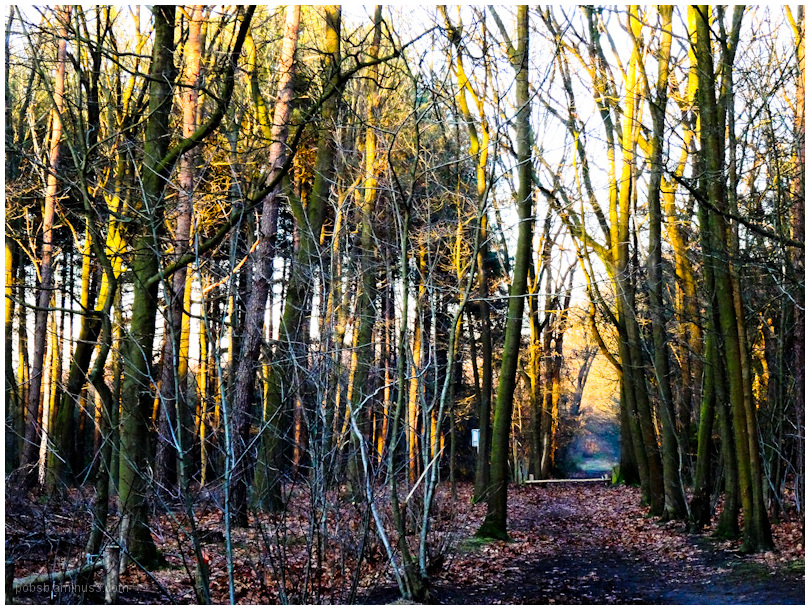 sunset in the woods 1