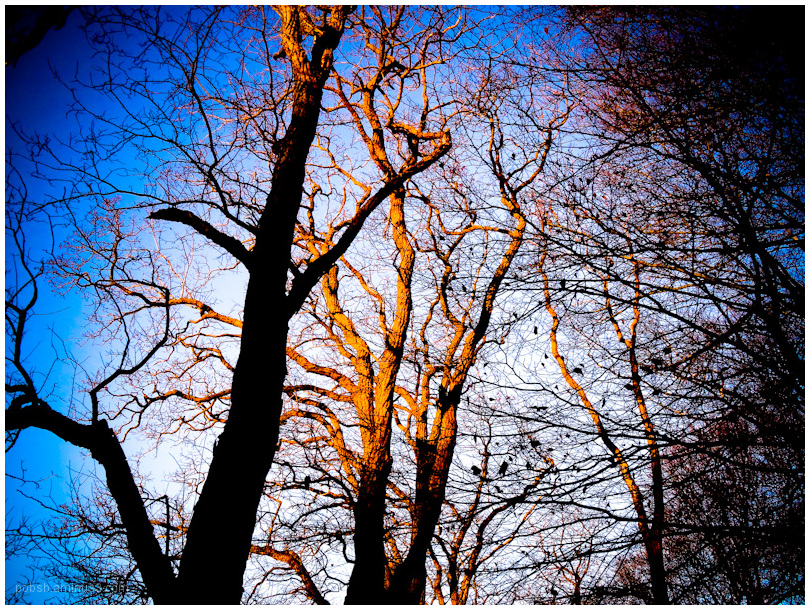 sunset in the woods 5