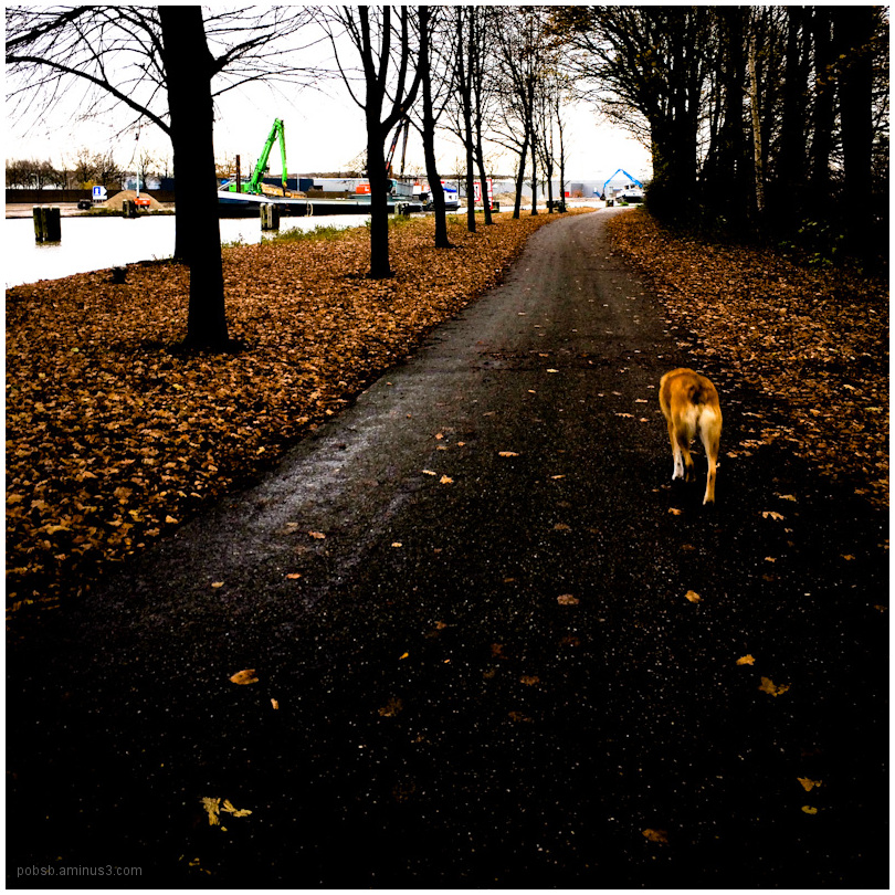 walking the dog 4