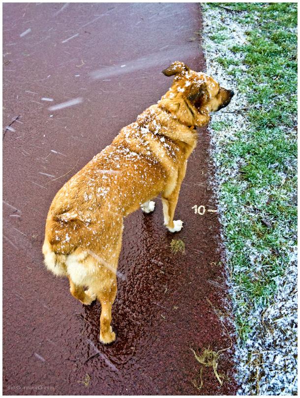 winterwalk 3