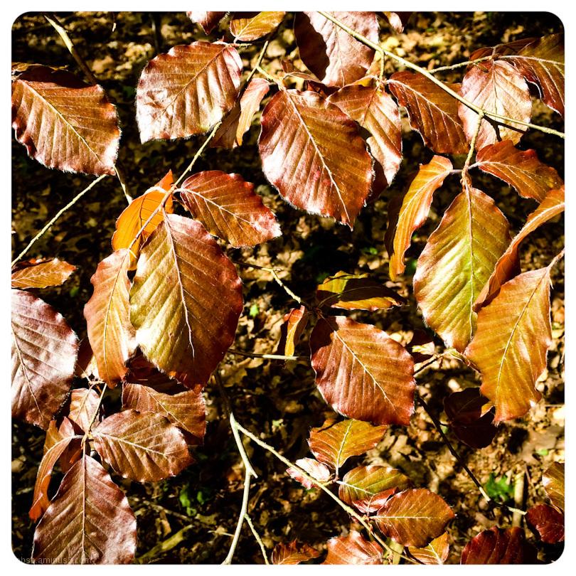 leafs in the sun