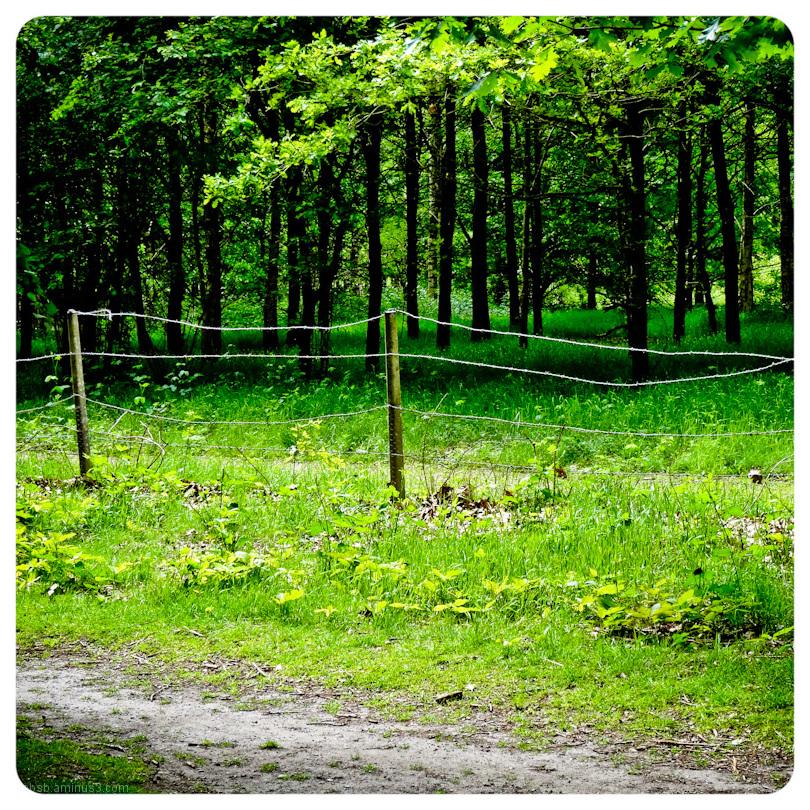 sunlit fence