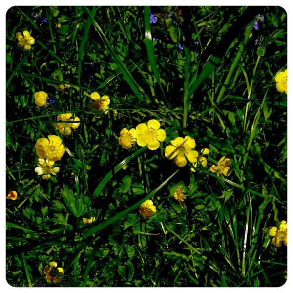 summerflowers 1