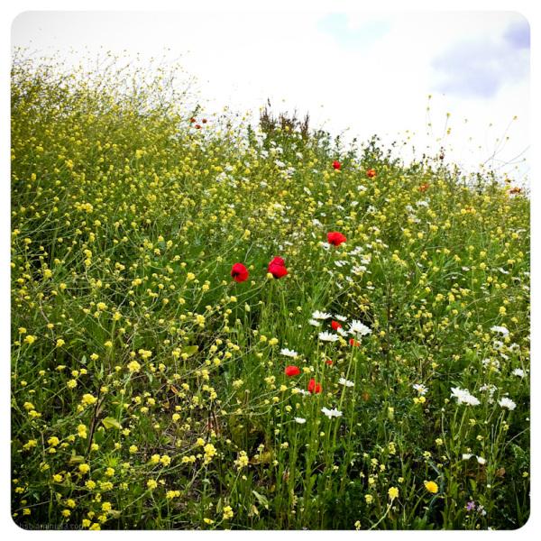 summerflowers 2