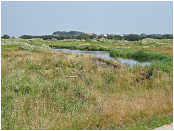 golfcourse 4