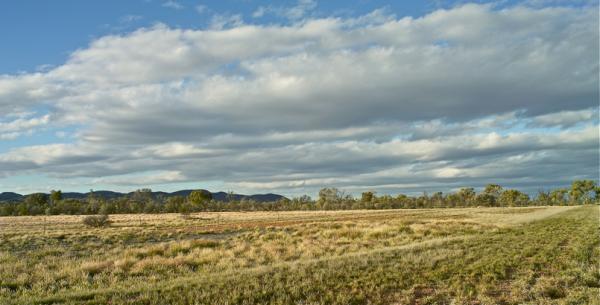 Yellow fields/Zelai horiak