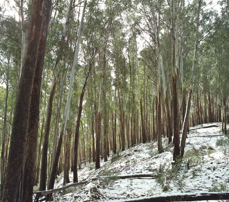 Austral snow/Hegoaldean elurra