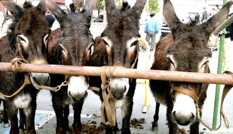 Zu hor ta ni hemen. Putza/Donkeys hate noises