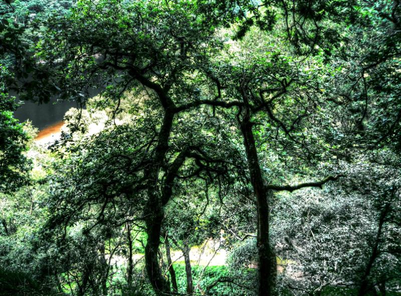 Arbol itzalak/Shadow of trees