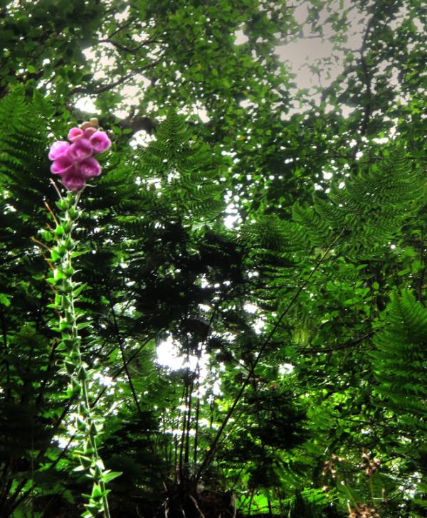 Lorea eta ira/Flower and plant