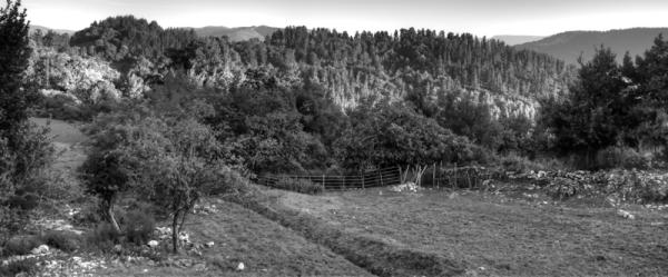Larra/Field