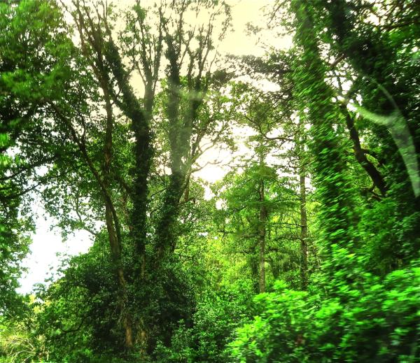 Basoa (detailea)/Forest (detail)
