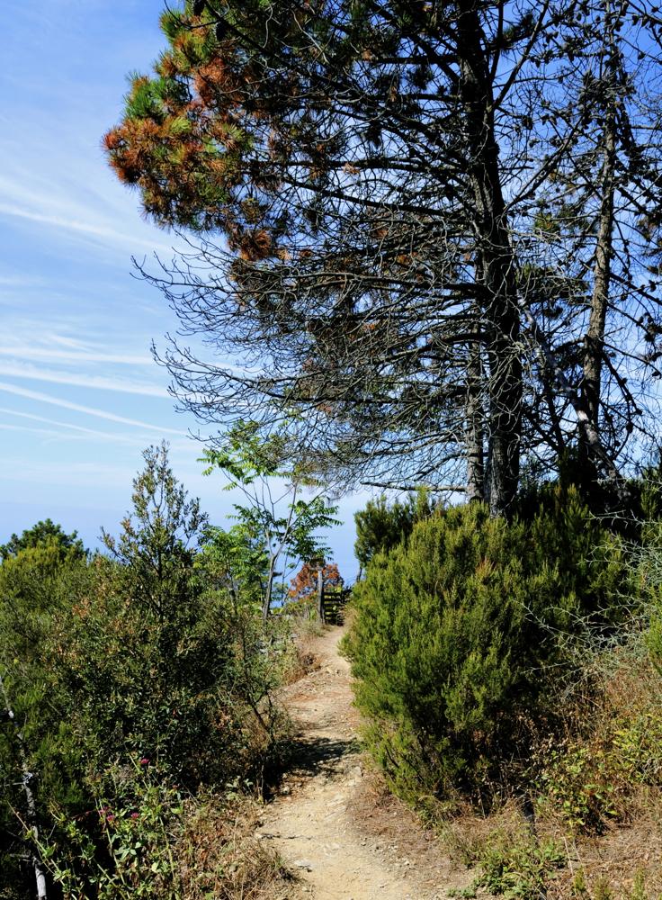 Bidexka estua/Narrow path