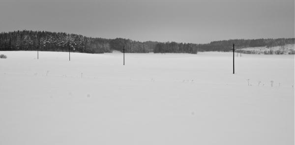 Elurra eta basoa/Snow and forest