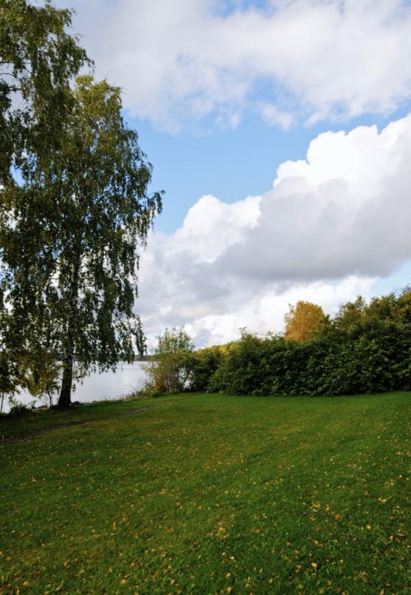 Zelaia, arbola eta hodeiak/Field, tree and clouds