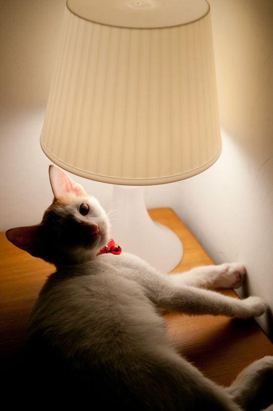 Cutie under the table lamp