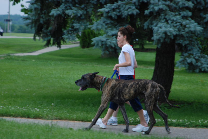 documentary street dog people