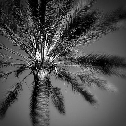 nature tree palm