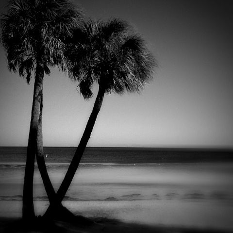 nature tree palm ocean