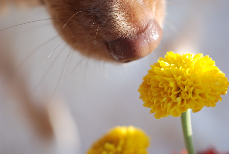 animal dog flowers