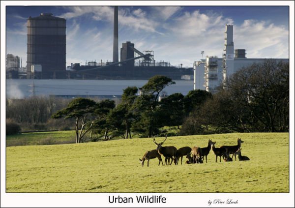 urban Wildlife