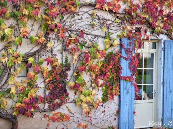 Couleurs d'automne .