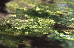 Green Rust