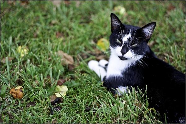 Persuasive Kitty