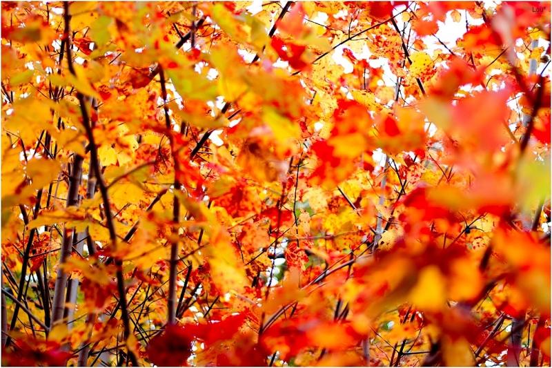 Through the cold, autumn