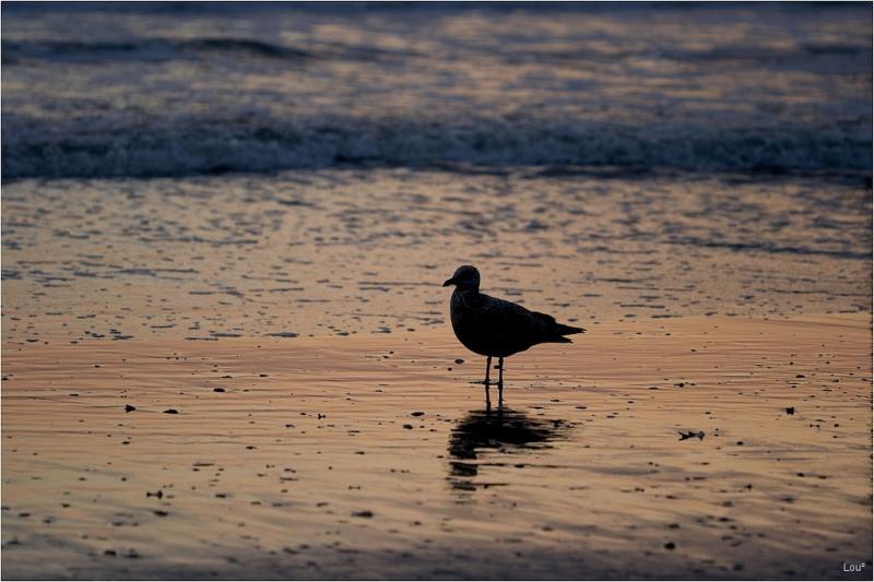 Seul sur le sable, les yeux dans l