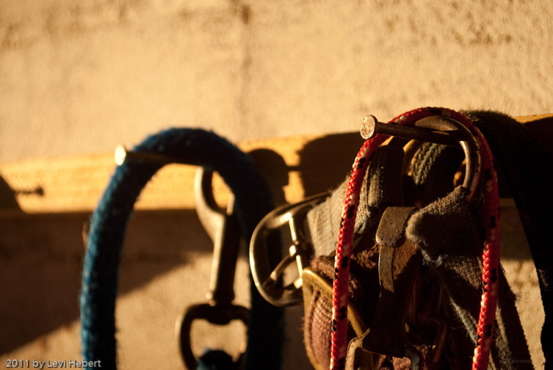 Horse halter and lead ropes hanging on a nail