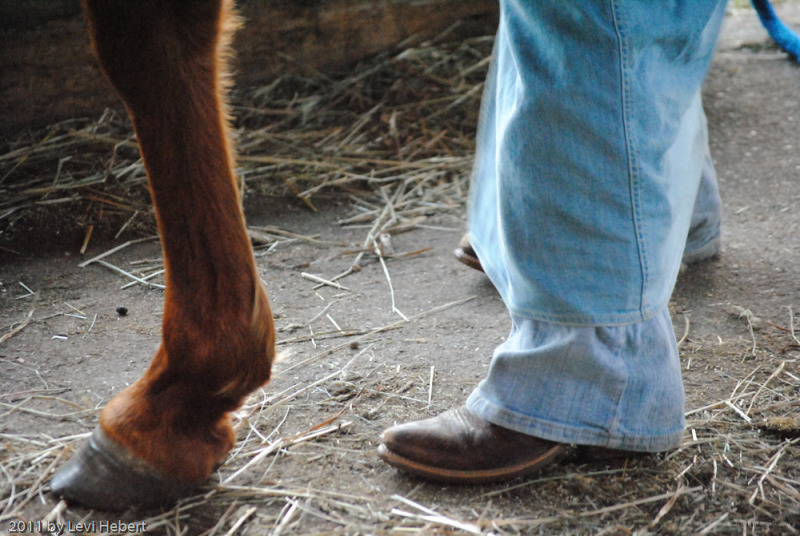 Horse hoves and leather boots