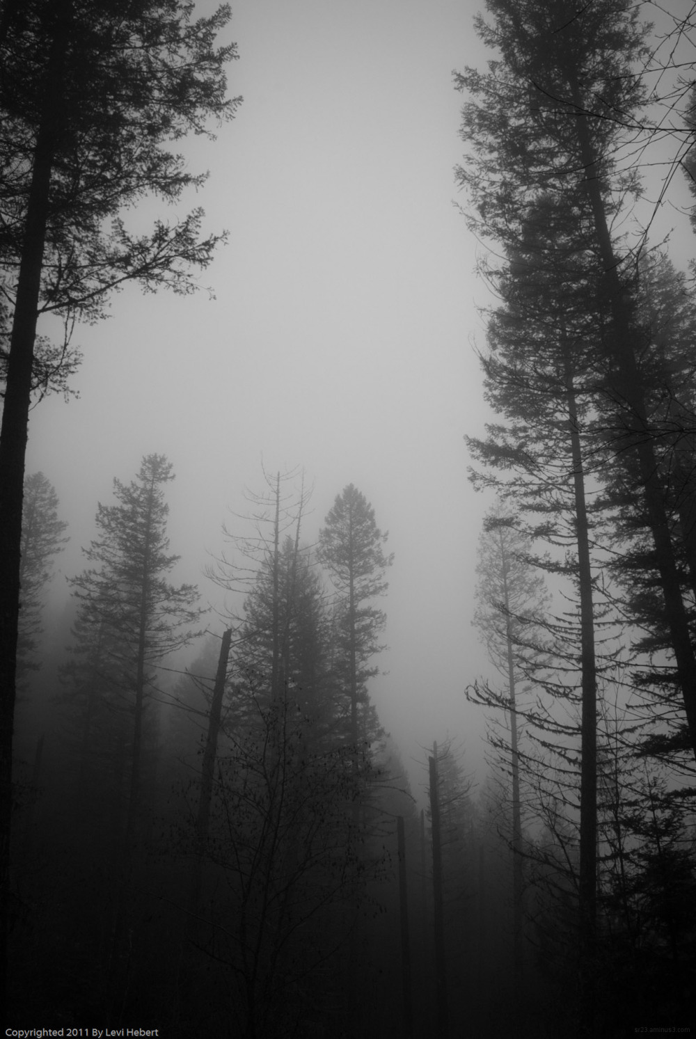 Trees in fog on the side of a mountan