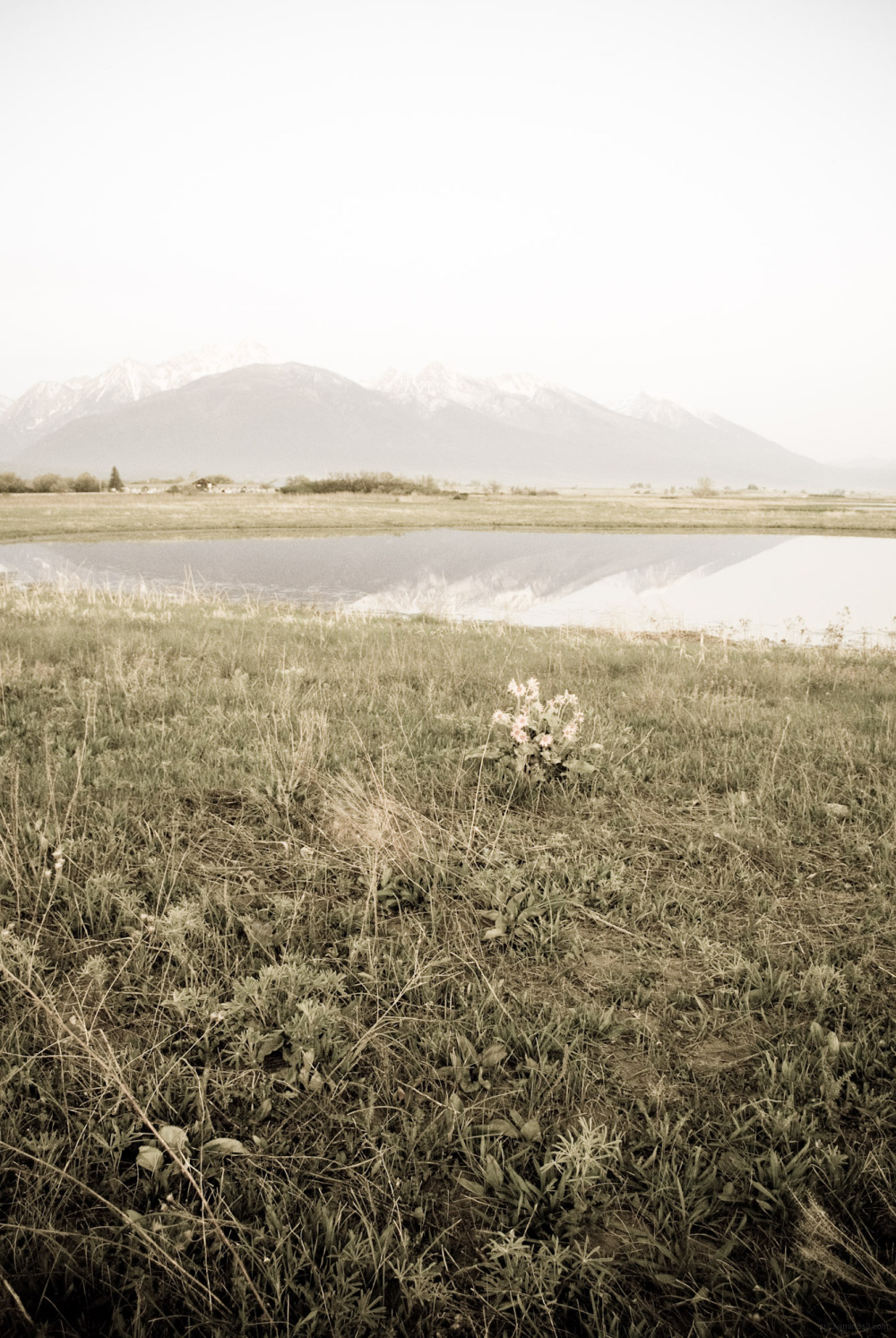 Flowers with lake and mountains in background.