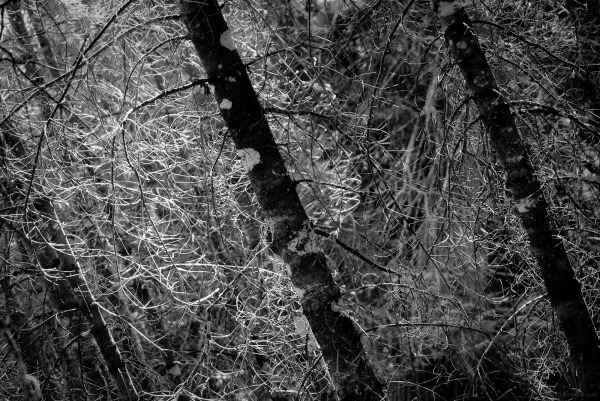 B&W photo of sunlight filtering through the trees.
