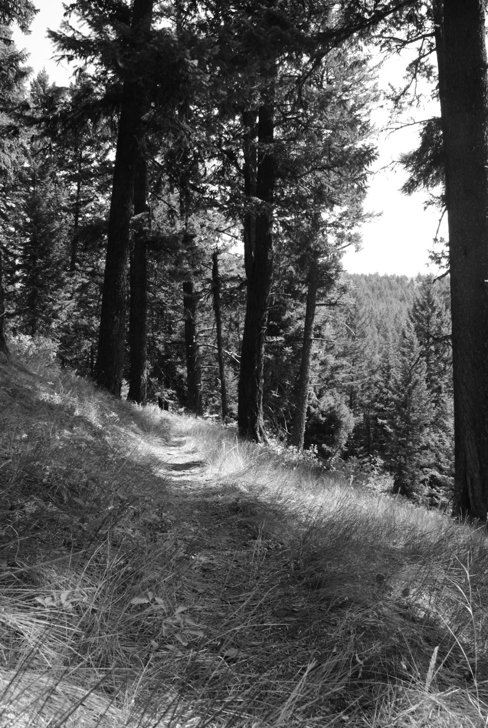 A mountainside trail in black and white