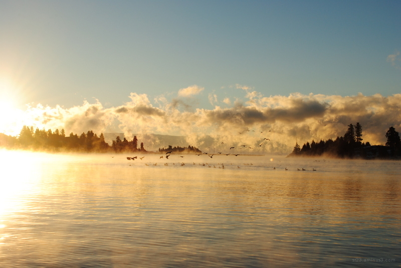 A flock of geese landing on a foggy lake.