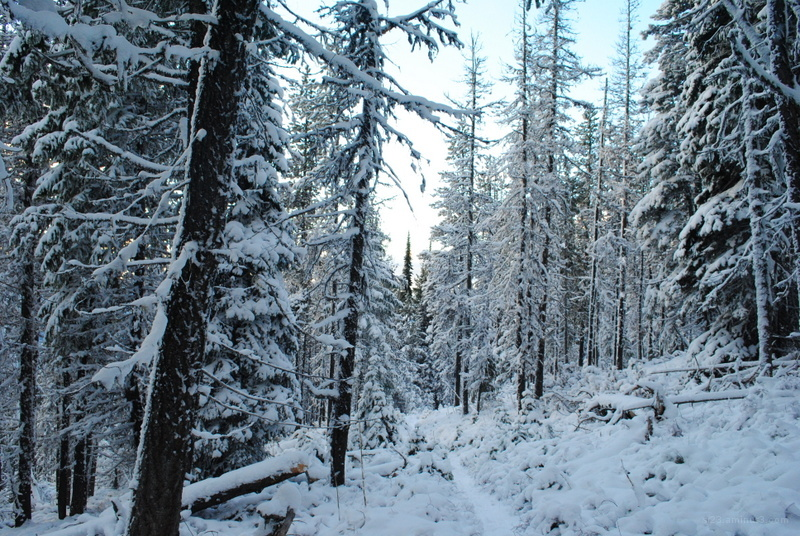 A mountain trail covered in fresh snow.