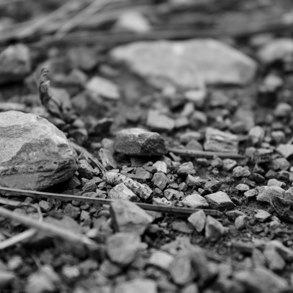 Black and white photo of gravel on a logging road