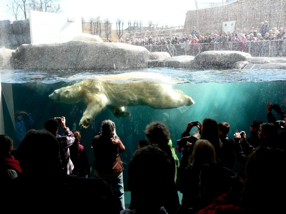 Den Arktiske Ring