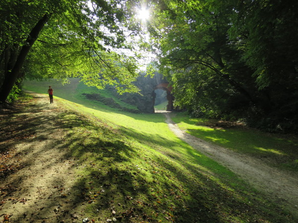 Idyllic Forest Scene