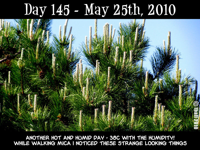 Day 145 - Candlesticks?