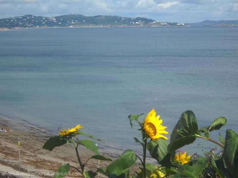 Seaside Sunflowers